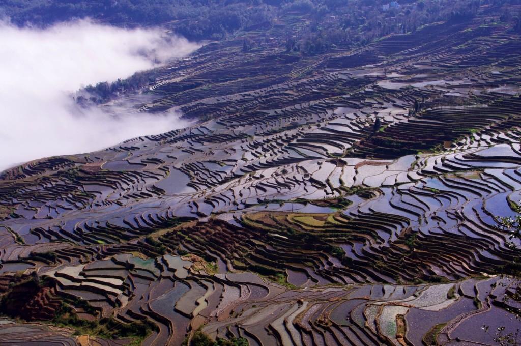 Yuanyang: Nachdem sich der Nebel lichtet zeigen sich die Reisterrassen in vollster Pracht. So kann Weihnachten also auch aussehen.