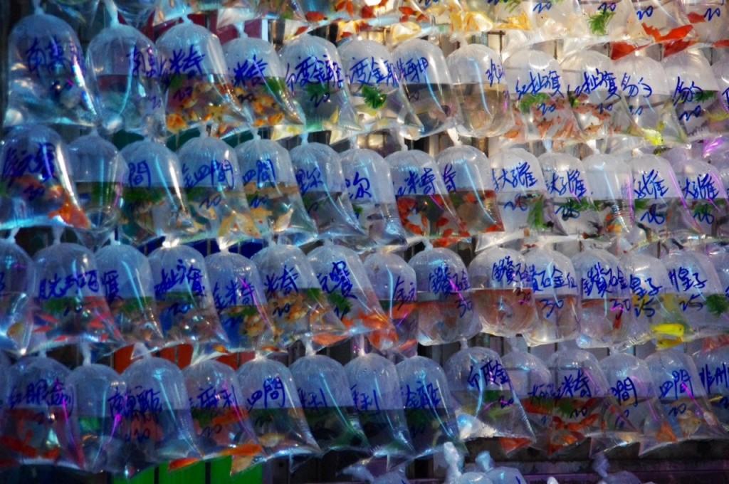 Ein buntes Treiben und eine riesige Auswahl. Der Sauerstoff in den Tüten reicht angeblich den ganzen Tag. Goldfish Market Street