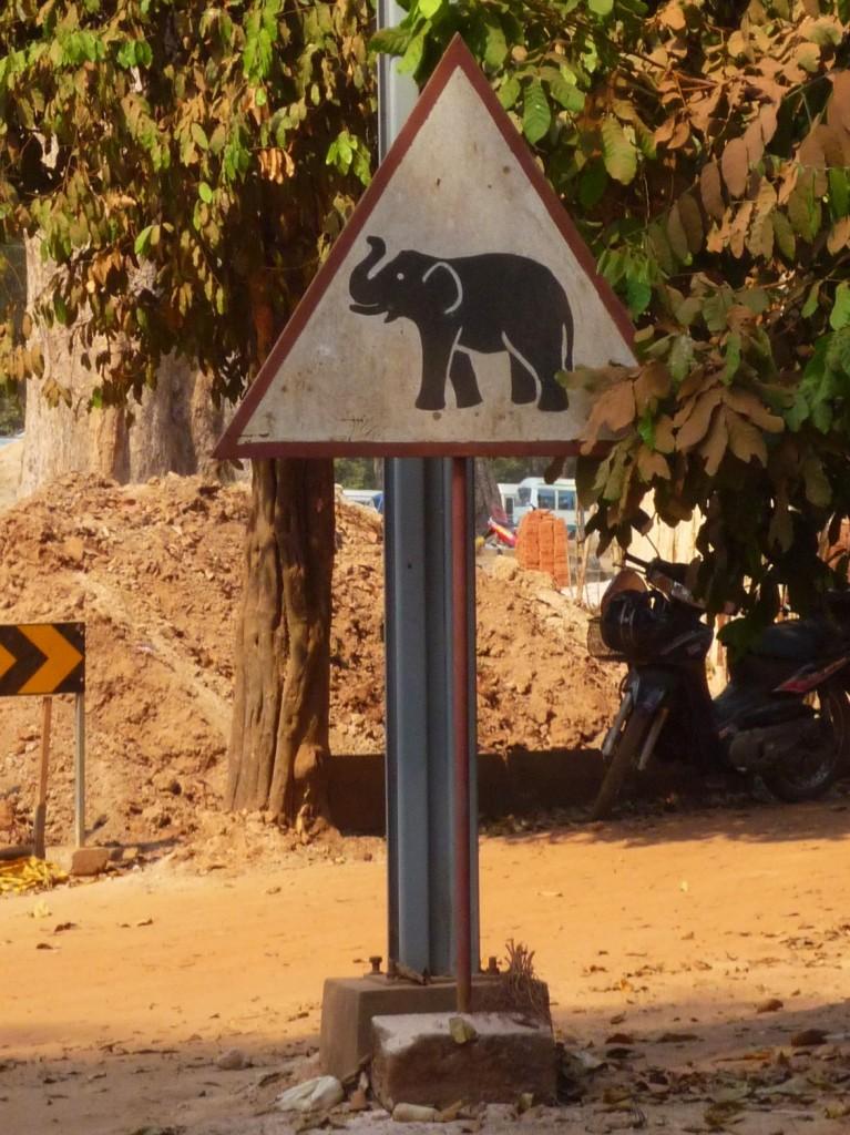 Da muss man mit allem auf der Straße rechnen. Diese Tierchen sind definitiv stärker als unser Moped.