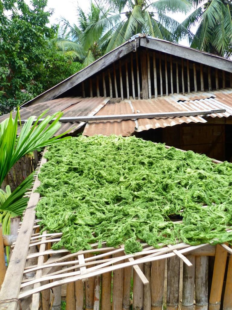 Das Mekong-Seegras wird zunächst gereinigt, leicht gesalzen und dann getrocknet. Danach wird es nach Belieben mit Knoblauch oder Sesam versetzt und später entweder gekocht oder als Snack gereicht.