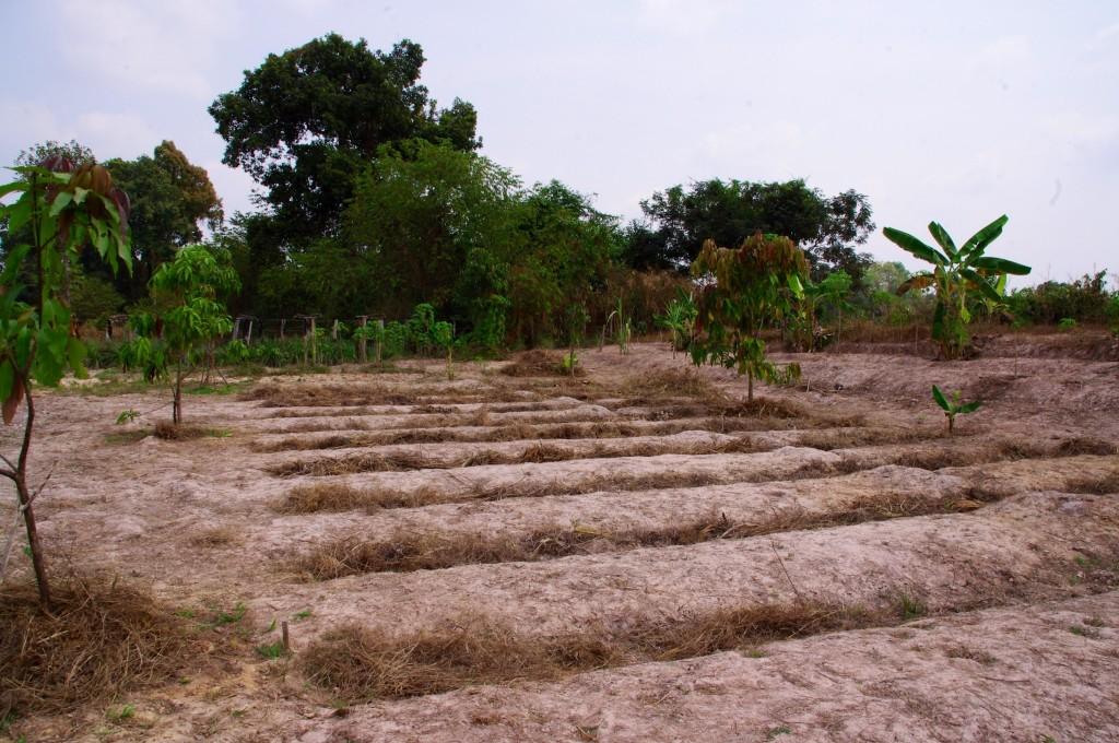 Es sind auch neue Beete entstanden, auf denen man die geplanten Neupflanzungsversuche durchführen kann.