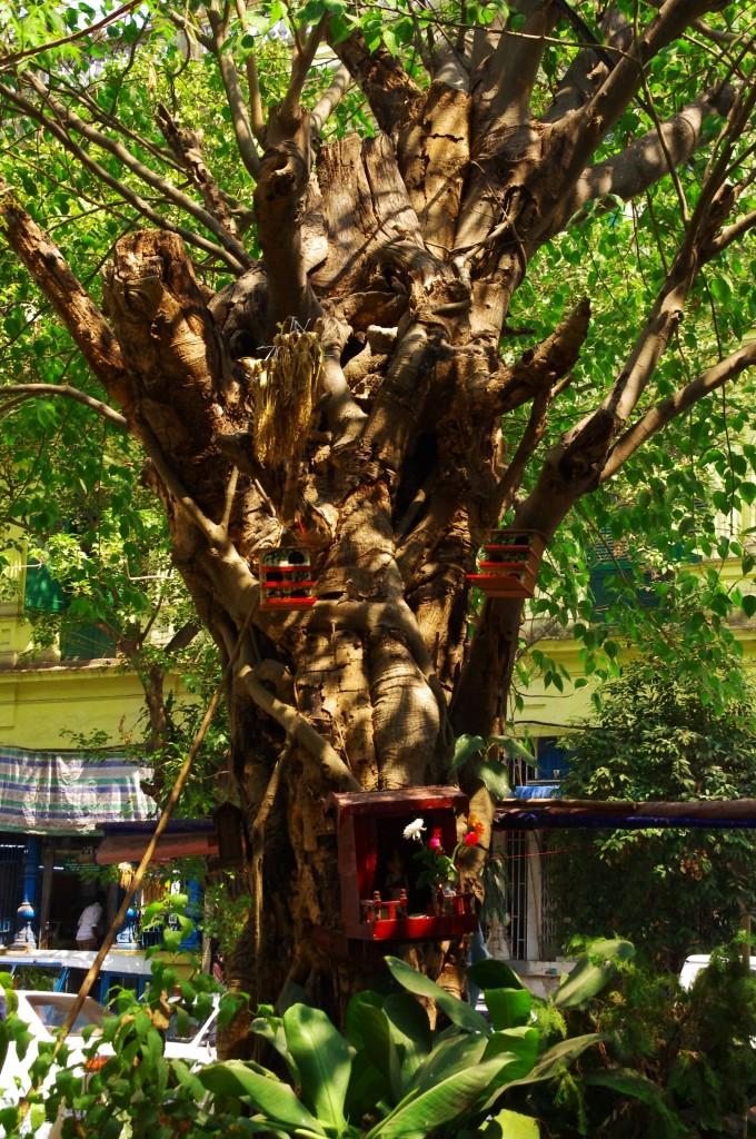 Yangon: Die Burmesen lieben Vögel und schaffen ihnen mitten in der Großstadt kleine und nett anzuschauende Domizile.